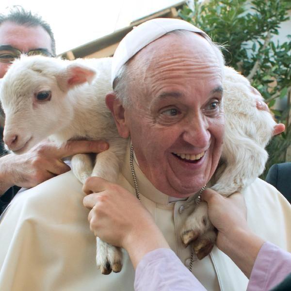 Papa Francisco e cordeiro
