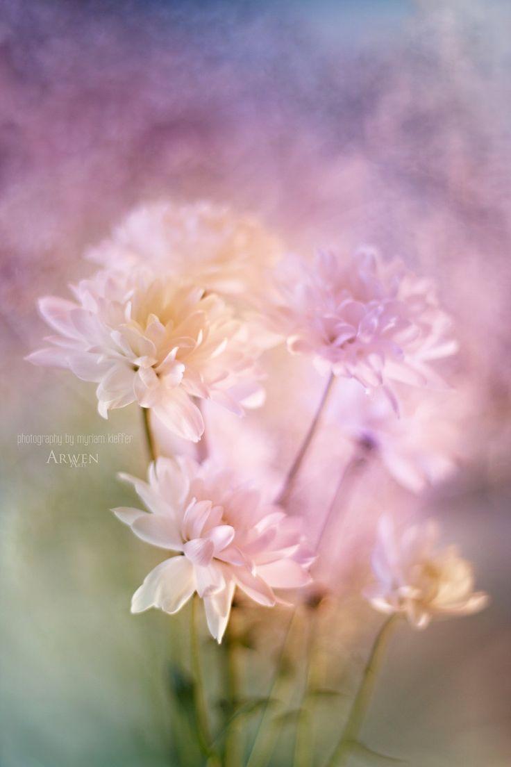 ╰❃╮ Quel souvenir pourrait évaporer ce temps en bouquet ? Tu aquarelles ma vie de tendres couleurs, eaux printanières aux bonheurs dilués... Nuages de douceurs.╰❃╮Poésie © Sandra Dulier