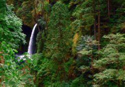 Eagle Creek to Punchbowl Falls Hike - Hiking in Portland, Oregon and Washington