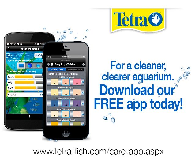 43 best images about tetrafish on pinterest new twitter for Fish tank app