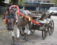 Donkey Car Concept