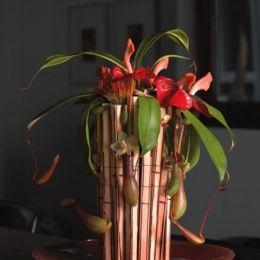 8_pook 2007 tropisch bloemwerk 1_59928_act.jpg