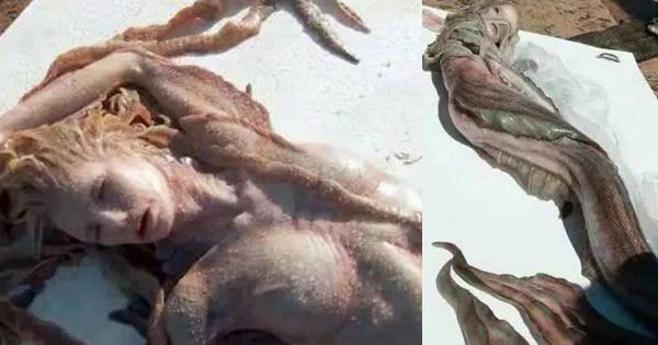 Founding Mermaid at Porbandar and Karachi beach | Unbelievable Things On Earth - The Amazing Place - Breaking News Today|