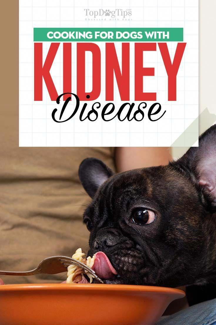 Brainy enlarged dogs nutrition kidney disease diet dog