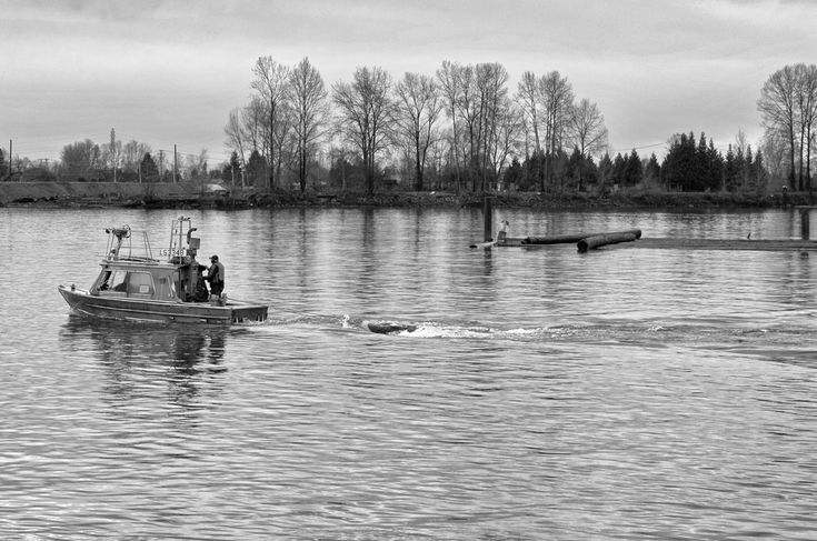 Log salvage in the North Arm of the Fraser River. Click image to enlarge.
