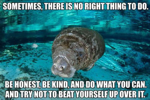 """[Image description: A photograph of a manatee swimming in water that is tinted blue, with visible water and algae on the ground below. The manatee is looking at the camera, facing the left side of the frame. TEXT: """"Sometimes, there is no right thing to do. Be honest, be kind, and do what you can. And try not to beat yourself up over it.""""] (Image credit)"""