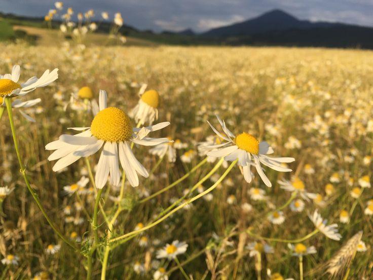 Flowers, flowers, everywhere flowers. :)