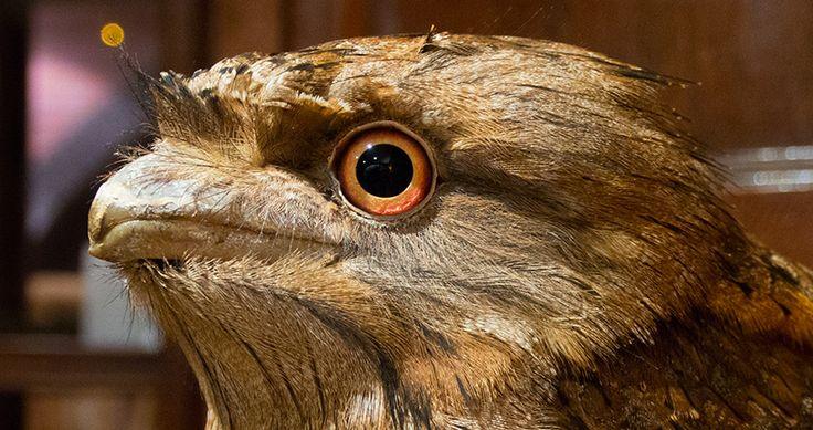 Wildlife on the property at Cedar Park Rainforest Resort, Kuranda | Atherton Tablelands | Queensland | Australia