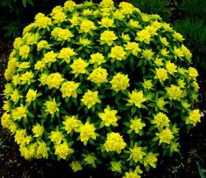 M s de 1000 ideas sobre perennes en pinterest jardiner a - Plantas perennes exterior ...
