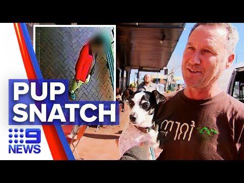 Inner West Community Reunites Stolen Pup With Owner 9 News Australia In 2020 Pup Australia Community