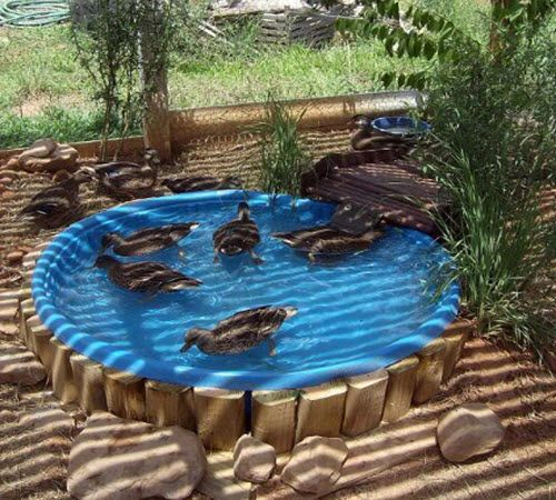 Here is an easy way to build a duck pond in your backyard. The beauty of this particular design is that the materials are cheap or free. Starting with a kiddie plastic pool and creating a drain hole, you can have a drainable, cleanable and refillable pool that works perfectly. There is no formal instruction …