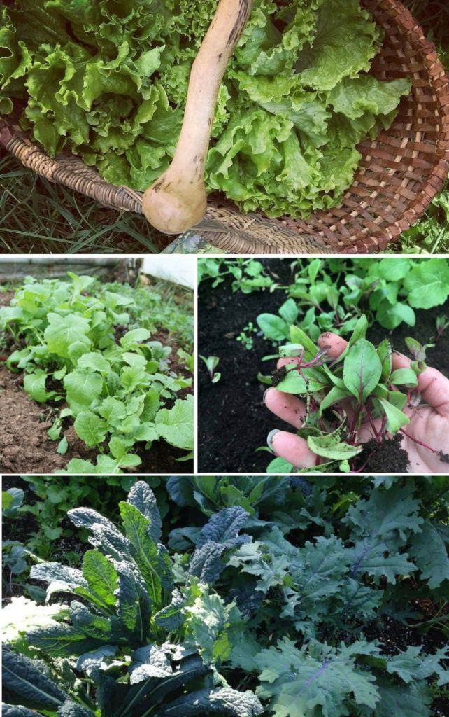 Abc S Of Home Gardening For The Vegetable Gardener With Images