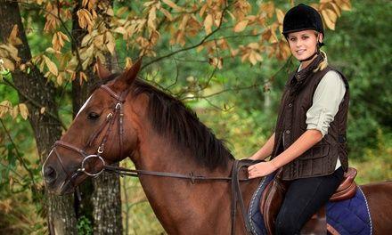 Centre Equestre du GENETEY à Saint Martin de Boscherville : Jusqu'à 1 an d'équitation: #SAINTMARTINDEBOSCHERVILLE 12.00€ au lieu de 25.00€…