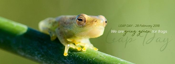 We've gone green for frogs today! Will you?     We are so inspired by the Endangered Wildlife Trust's #LeapDay campaign for South African frog awareness we've convinced our colleagues in our Johannesburg and Cape Town offices to wear green and make a donation for the privilege!    In fact, why not make it a global effort?