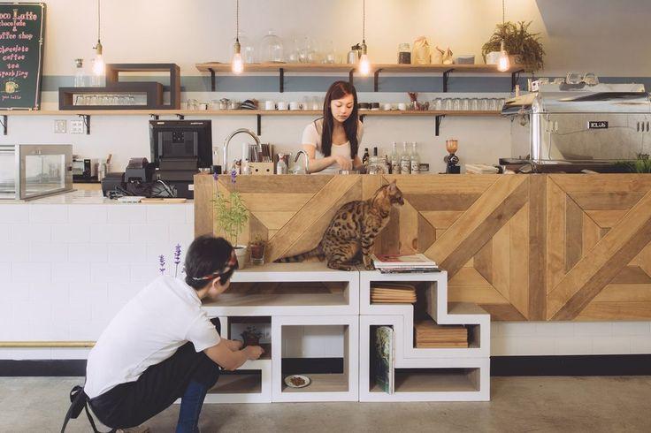 Modular Climbing Cat Tree and Scratching System by Katris - White – PetsOwnUs