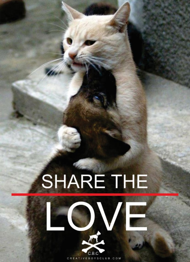 Your pinterest is cool. Now share the love!