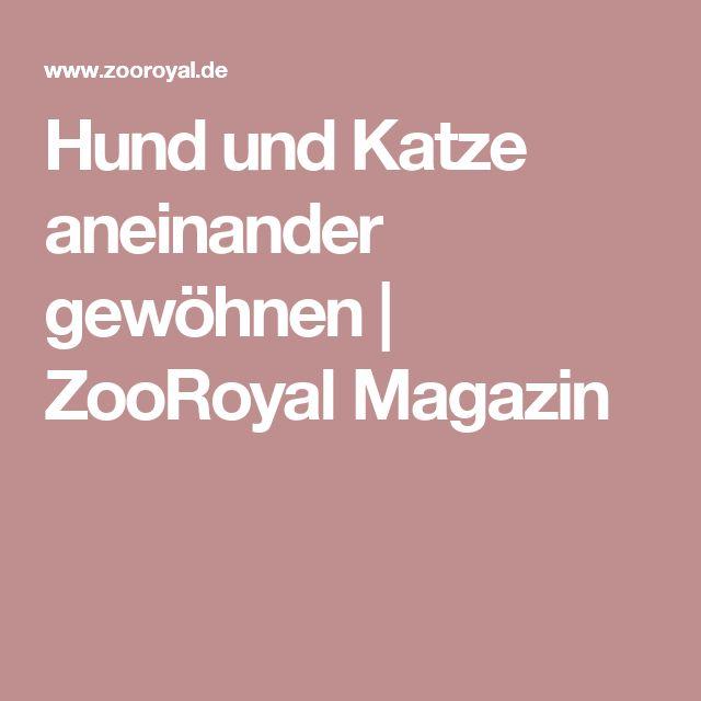 Hund und Katze aneinander gewöhnen | ZooRoyal Magazin