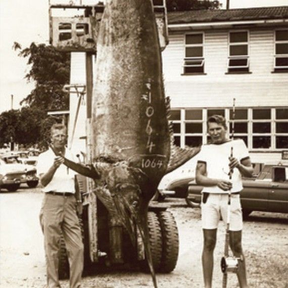 On 25 September 1966, Capt. George Bransford made world fishing history when he and deckhand Richard Obach landed a 1,064lb black marlin (pictured above right), the first grander ever landed in Australian waters.