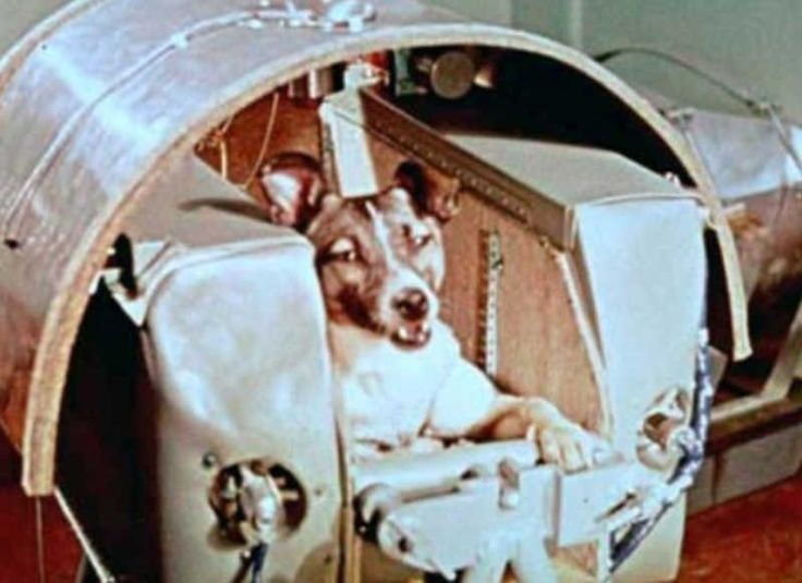 Laika, the first dog in space, has her capsule built around her. No provisions were made for her return, and she died in orbit. The Russians did this!!