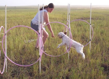 Great ideas for making your own agility equipment, most with found or dollar store parts.