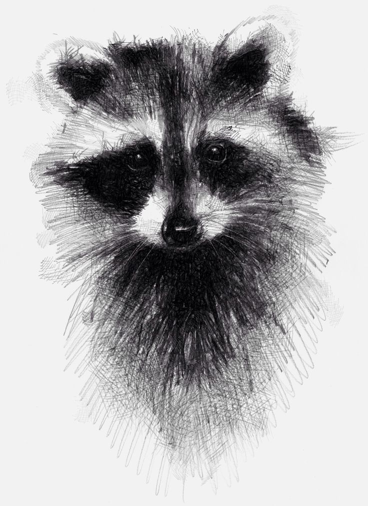 One of my sketch a day drawings Raccoon and 365  #http://etsy.me/1rARc0J #raccoon #sketch.drawing