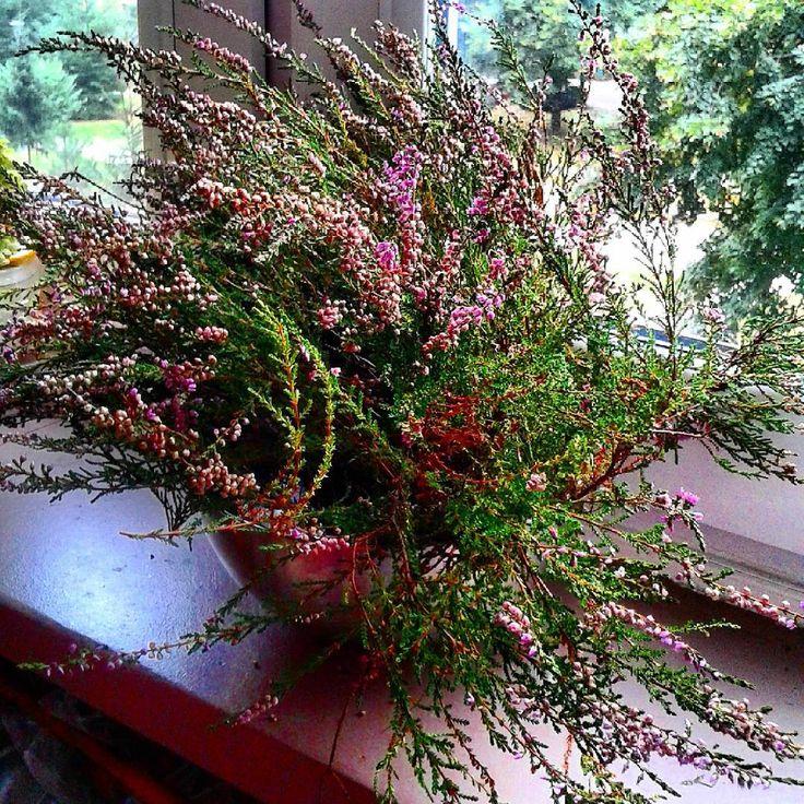 Mam na oknie taki kawałeczek lasu.Stoi i stoi i cieszy oczy.#bukiet #wrzos #darylasu #kwiatyleśne#bouquet #heather #forestflowers #autum #jesień