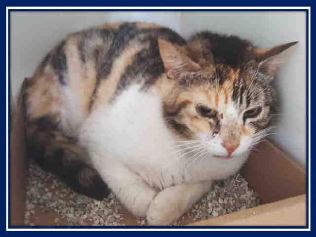 MILLIE - A1077548 - - Staten Island  Please Share:   ***TO BE DESTROYED 06/22/16*** SECOND CHANCE TONIGHT FOR MILLIE – AND THE SHELTER EVEN GAVE HER A NEW PICTURE FOR THE OCCASION!!  How nice of them – they let MILLIE sit for days with a bad photo but now she is on death row – when time is running out – THEN she gets the different pic.  MILLIE is a beautiful calico cat with a sad expression. In her photo, she looks like a gorgeous but sad cat paintin