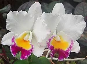 Growing Orchids - Everything You Need to Know