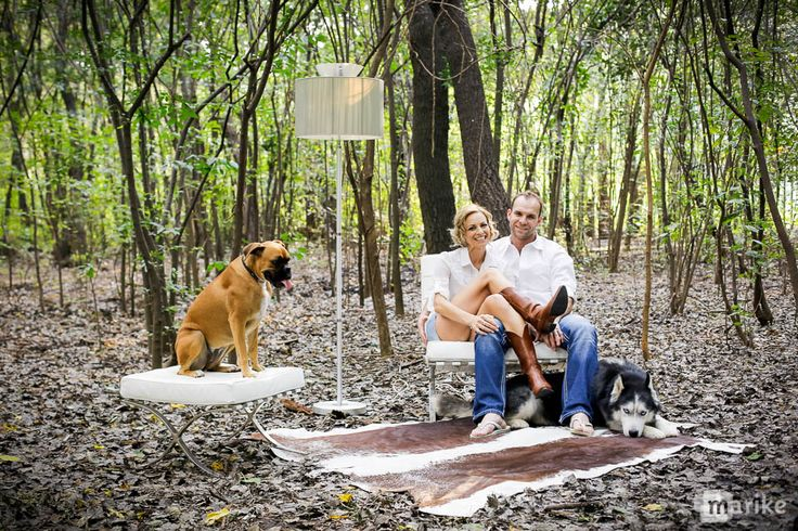 engagement, styled, forest, furniture, dogs