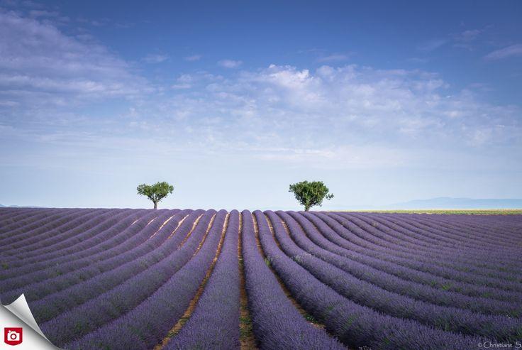 Wat is zo'n prachtig lavendelveld toch rustgevend om te zien! Met mooie golvende lijnen naar de horizon, een strakke compositie (de twee bomen pakken mooi de aandacht) en de prachtige paarse kleuren is dit onze Foto van de Dag! Gefeliciteerd, crispin52! Bekijk meer mooi landschappen van crispin52: http://crispin52.zoom.nl/