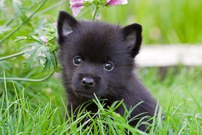 i wants one....
