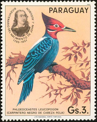 Cream-backed Woodpecker stamps - mainly images - gallery format