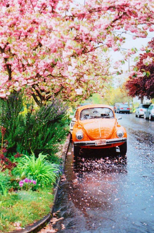 Spring: Orange, Cars, Things, Spring, Photography