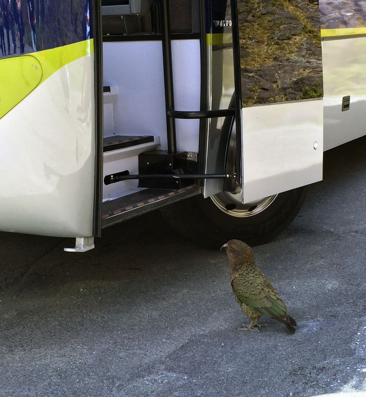 Excuse me sir, may I trouble you for a lift to Milford Sound on your magnificent coach?