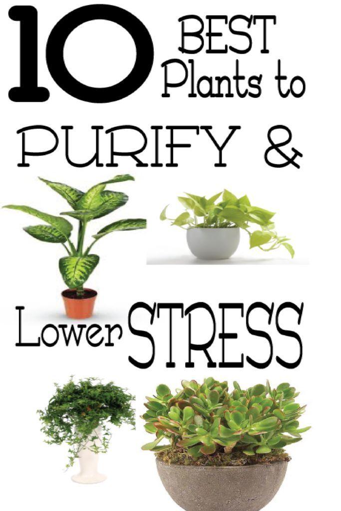11 Beste Pflanzen zur Reinigung und Stressreduzierung  #beste #pflanzen #reinigu…