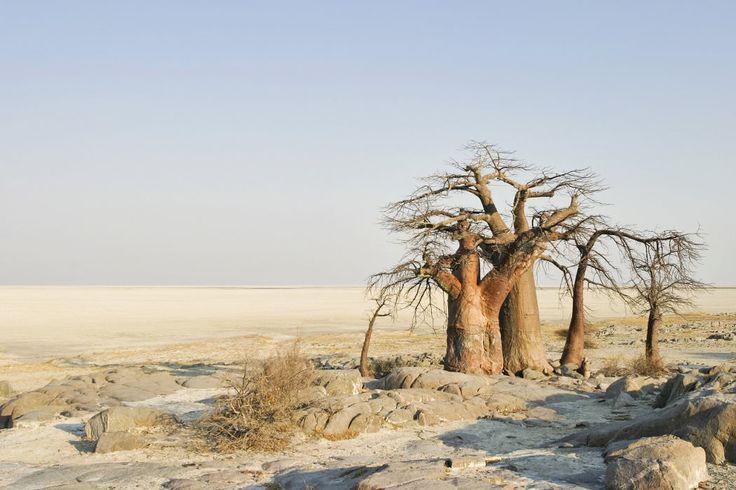 Kubu Island, Makgadikgadi Pan, Botswana