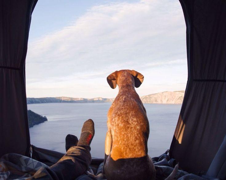 Deze hond reist de hele wereld over - Vrouwen.nl