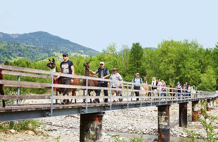 Mit Lamas durch Wälder und Auen   Schweizer Familie