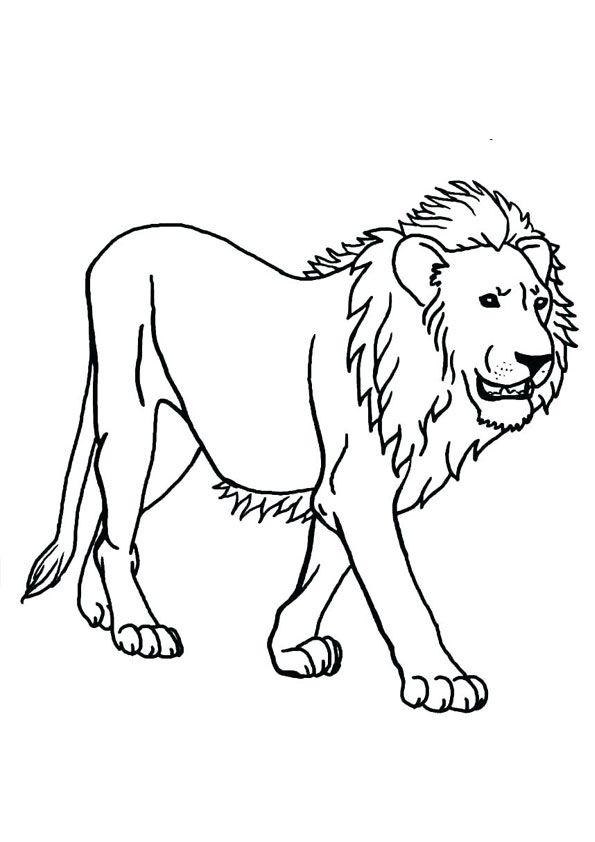 Lion Walking Coloring Page For Kids Coloring Pages Lion Walking Free Printable Coloring Pages