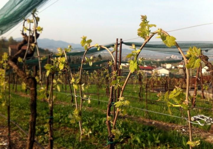 have a nice #spring, have a nice week, have a nice day.  #valdobbiadene and #prosecco lands are blossoming