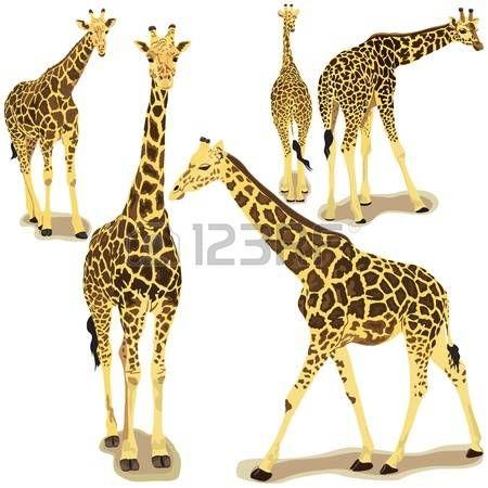 sagoma giraffa: Illustrazione vettoriale di giraffa