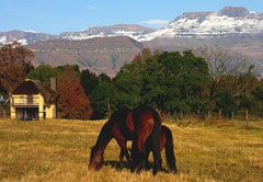 KwaZulu Natal Guest Farms / Farm Stay Accommodation