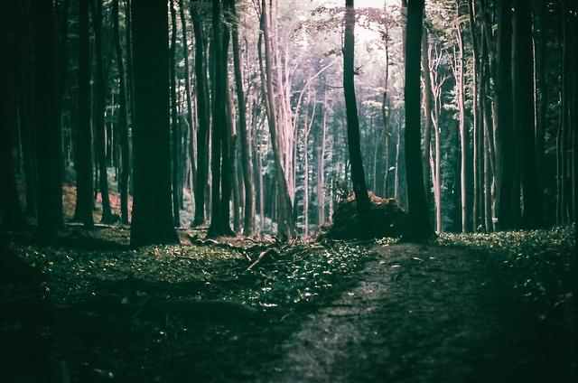 light @night by van Peer, via Flickr