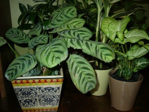 House Plants Plants Weeks