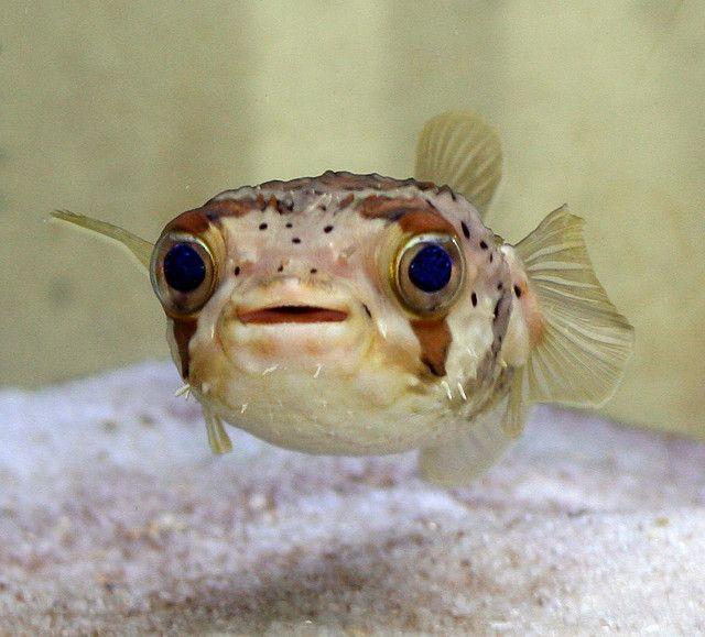 Aquarium Fish April 2008 Photo Contest Winner