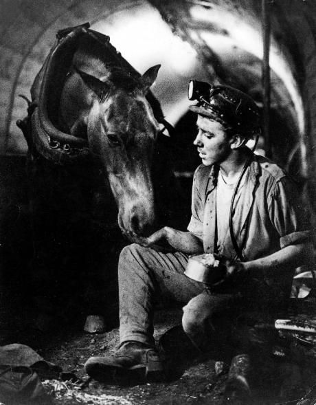 A young Welsh miner sitting in a mine, feeding a pit pony.  Reminds me of my dad whose first job was down the mine as a blacksmith shoeing the ponies.