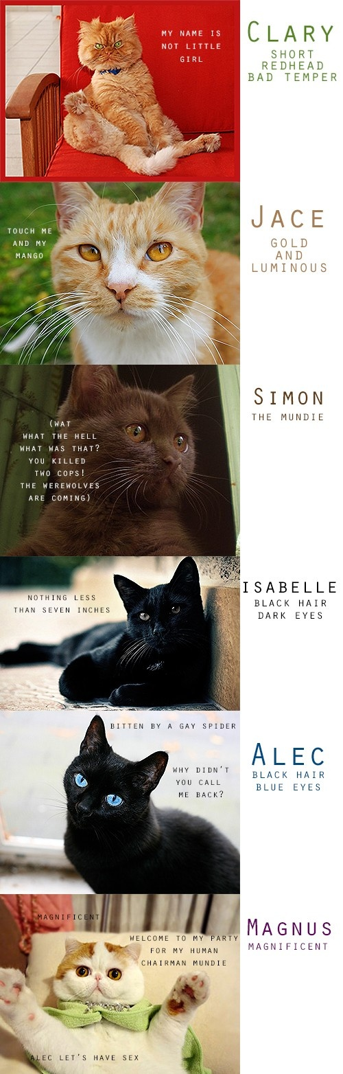 TMI characters as cats...............i feel like i should be freaked out but a kind of expected this out of the fandom............