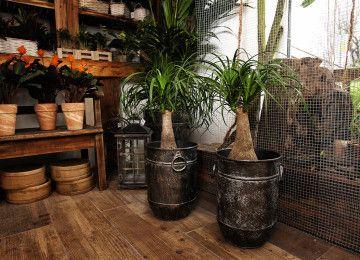 Črepníkové rastliny