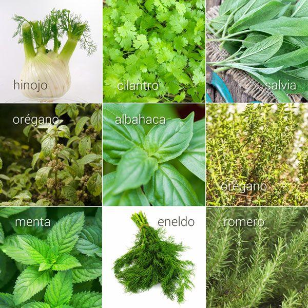 Hierbas aromáticas, sus usos en la cocina | Cocinar en casa es facilisimo.com