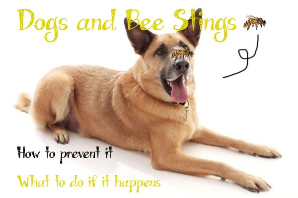 Bee Careful: Everything You Need to Know About Dog Bee Stings